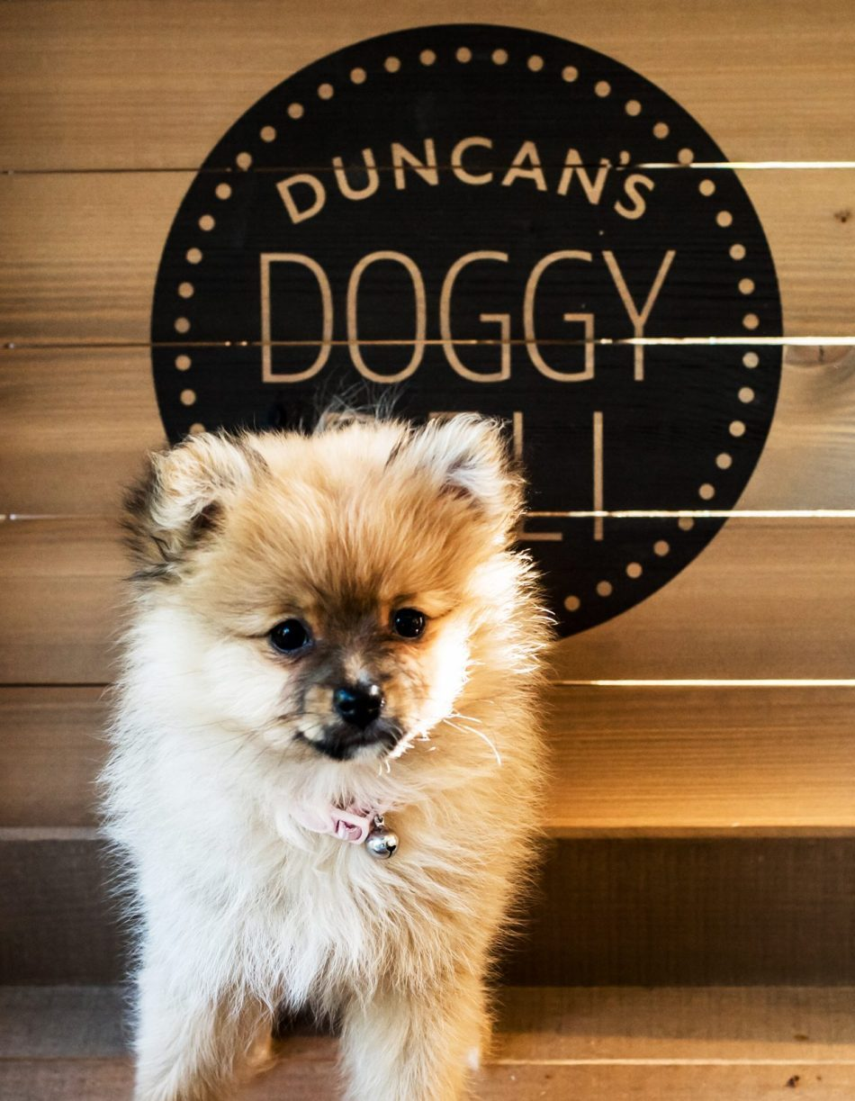 Pomeranian standing with Duncan's doggy deli logo