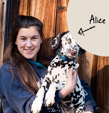 Alice's team member picture