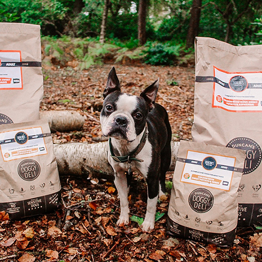 boston terrier with food packs